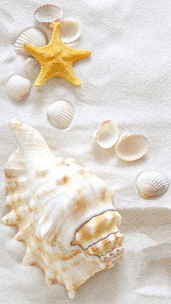 Samsung Galaxy S7 Sand and Clams Wallpapers