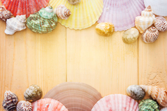 art background board clam clean cockle cockleshell