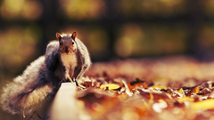 Squirrel Desktop Wallpapers
