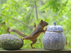 smart squirrel wallpapers