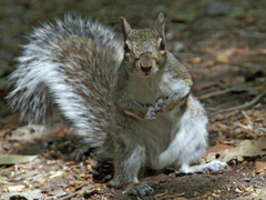 Curious Squirrel HD Wallpapers