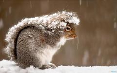 HD Cute Squirrel Eating Wallpapers