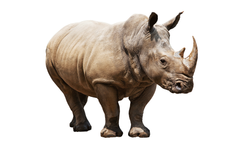 Most viewed Rhino wallpapers