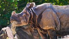 Rhino Eating Grass 4K HD Desktop Wallpapers for 4K Ultra HD TV