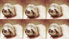 Captivating Sloth Astronaut Wallpapers 1920x1080PX Sloth