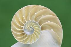 Pin Nautilus Wallpapers