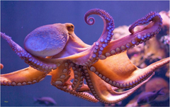 Octopus Wallpapers Unique Octopus Meh The Best Wallpapers Collection