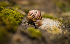 K Snails Wallpapers High Quality
