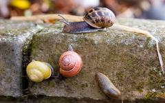 Colorful Snails In Action