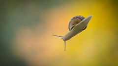 Animals snails blurred backgrounds gradient wallpapers