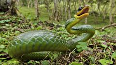 Anaconda Snake Wallpapers