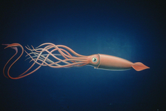 Giant Squid Wallpapers