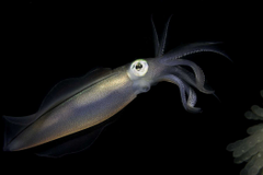 Squid HD Wallpapers