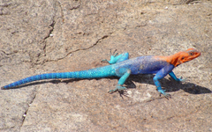 Agama Wallpaper Backgrounds