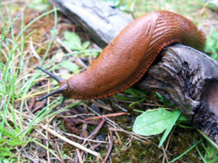 Cute Slugs Wallpapers Image
