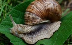 wallpapers 1280x800 snail slugs macro shell