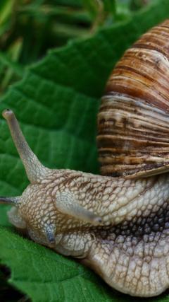 wallpapers 1080x1920 snail slugs macro shell