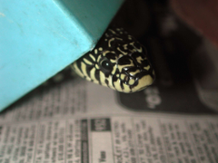 Bedding Options for Your Pet Snake