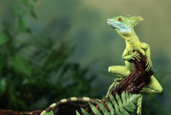 Adorable Lizard Wallpapers
