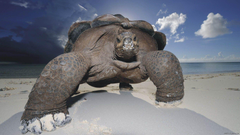 HD Quality Wallpapers Tortoise Wallpapers Tortoise Image For