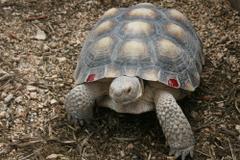 HD Tortoise Wallpapers