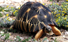 Tortoise Wallpapers for PC
