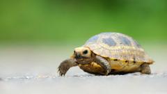 Baby Elongated Tortoise HD desktop wallpapers Widescreen High