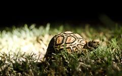 Tortoise wallpapers hd