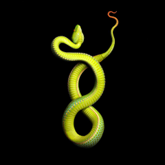Vivid Snake Photos Come at a Cost