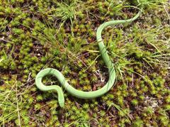 Green Snake Wisconsin yasminroohi