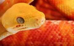 Dangerous Snake Wallpapers 11