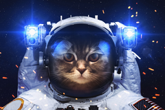 Astronaut Cat HD Others 4k Wallpapers Image Backgrounds Photos