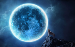 Howling wolf full moon Wallpapers