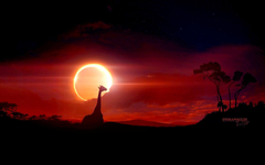 Lunar Eclipse Viewed From Merritt Island Florida Wallpapers