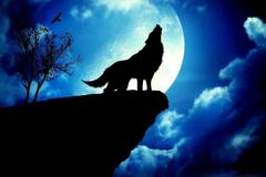 Hintergrundbilder f r Wolf Moon Wallpapers 3d