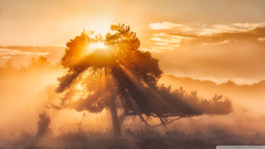 Morning Sun 4K HD Desktop Wallpapers for 4K Ultra HD TV Tablet