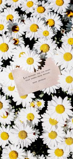 white daisy flowers pinterest