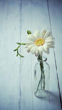 Aesthetic Beauty Daisy Vase iPhone 8 ilikewallpapers