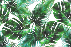 Watercolor Tropical Leaves Backgrounds Hd