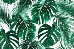Aesthetic Palm Leaves Wallpapers