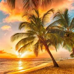 Palm Tree Tropical Beach iPad Air ilikewallpapers