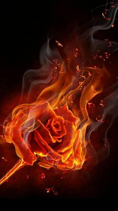 burning rose Wallpapers by georgekev