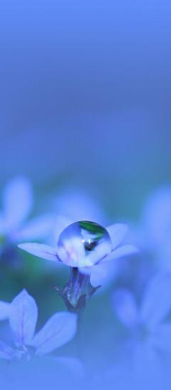 Flower Glare Drops