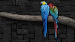 Desktop Wallpapers Gallery HD Notebook Blue Macaw parrots