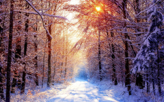 Snowy Scene Wallpapers