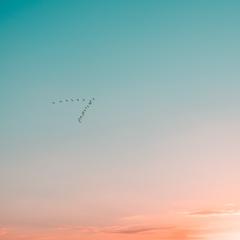 wallpapers 2780x2780 sky birds flight gradient