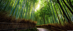 Bamboo Wallpapers 7