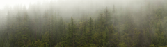 Some Foggy Forest OC for Dual Screens