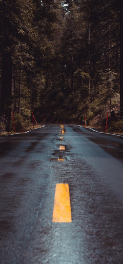 Road Forest Turn Wallpapers