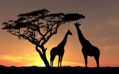 Unusual Cropped Africa Wallpapers Desktopaper